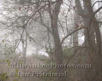 Photograph of Misty Tangled Branches from www.MilwaukeePhotos.com (C) Ian Pritchard