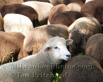 Photograph of Sheep Clouds from www.MilwaukeePhotos.com (C) Ian Pritchard