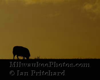 Photograph of Sheep Silhouette from www.MilwaukeePhotos.com (C) Ian Pritchard