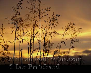 Photograph of Sunset Wheat from www.MilwaukeePhotos.com (C) Ian Pritchard